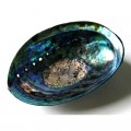 Unboxed Fully Polished New Zealand Natural Paua Shell Inside